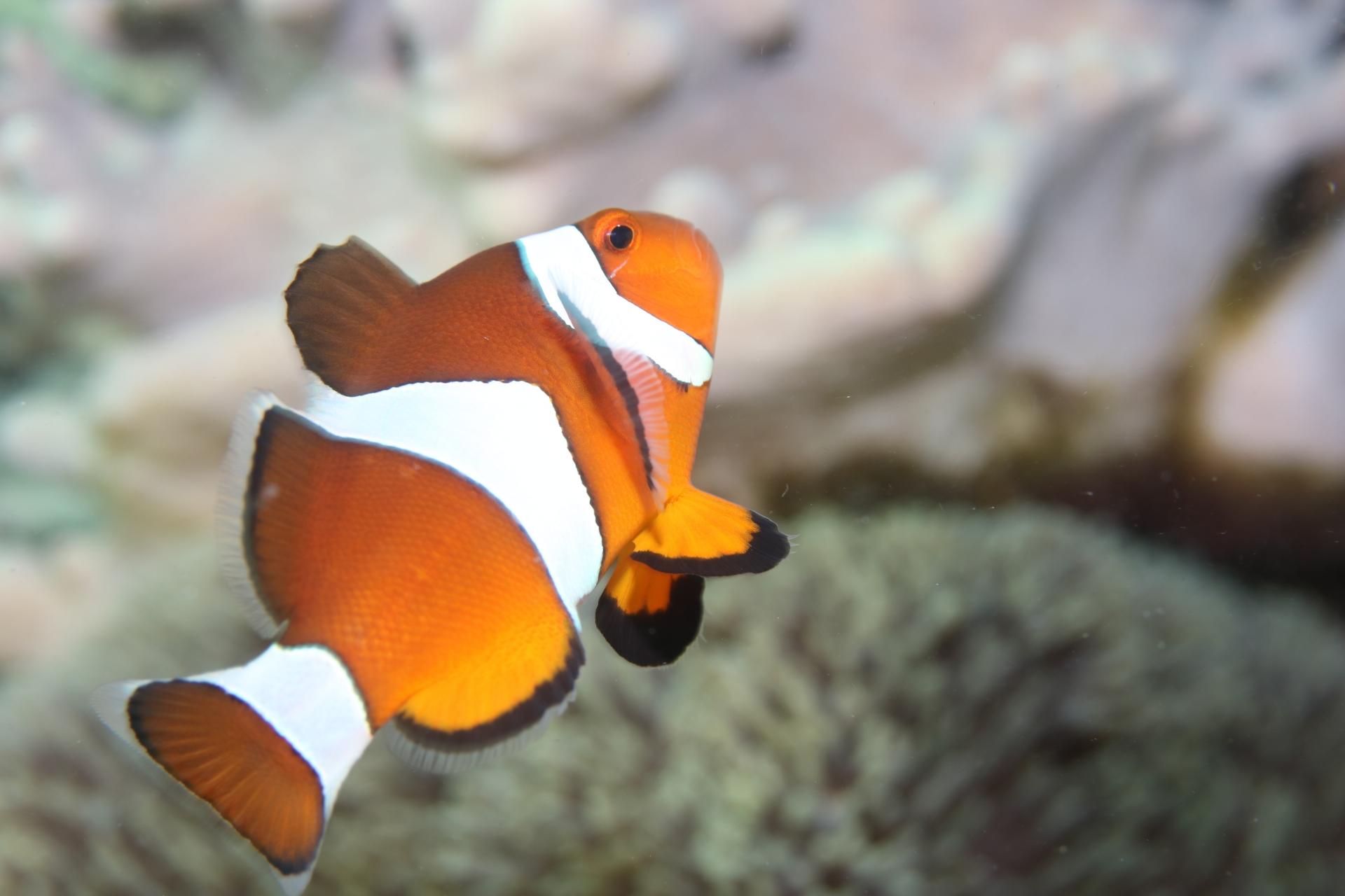 サンゴ、魚の群れ、水の透明度!ボホールの海は魅力がたくさん
